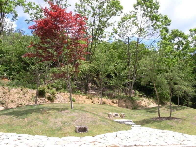 樹木葬イメージ